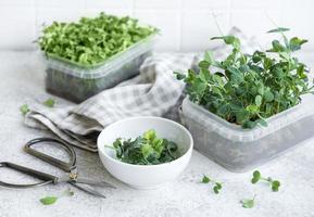 variedade de micro verdes na mesa de madeira foto