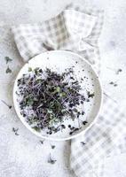 micro verdes. sementes de rabanete germinadas. foto