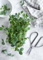 micro-verduras de ervilhas na mesa de madeira foto