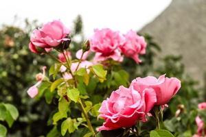 bela flor natural closeup foto