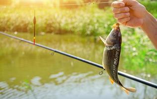 mão masculina segurando a carpa espelho. pesca no rio. copie o espaço foto