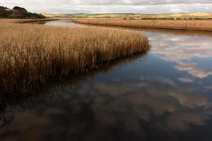 rio com grama dourada no pantanal de Princetown foto