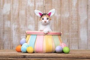 gatinho adorável dentro de uma cesta de páscoa com orelhas de coelho foto