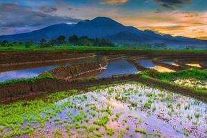 belas paisagens nos campos de arroz com montanhas azuis e água refletindo o céu da manhã foto