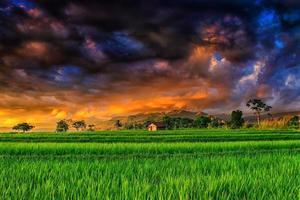 a vista dos campos de arroz verdes com o céu assustador de monstro à noite foto