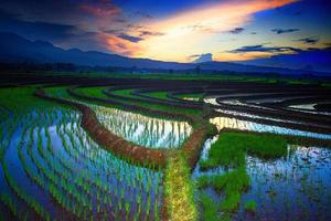 a vista dos campos de arroz refletindo as montanhas e o céu da manhã foto