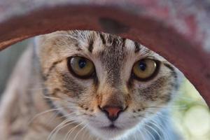 close-up nos olhos de um gatinho curioso foto