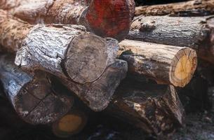 troncos de madeira hopea odorata empilhados. foto