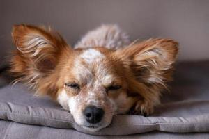cachorrinho fofo na cama foto