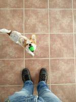 dono brincando com cachorro foto