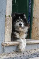 cachorro abandonado na cidade foto
