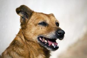 cabeça de cachorro foto