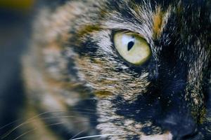 detalhe do olho de gato foto