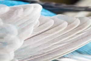 closeup de penas de pássaro foto