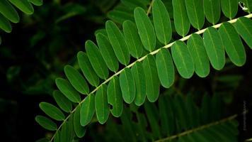 fotos de close-up de detalhes de folhas verdes frescas, exclusivas para o fundo.