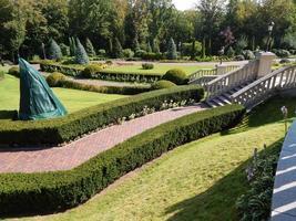 projeto paisagístico e composição de plantas de jardim foto