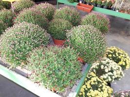 viveiro de plantas ornamentais para jardim foto