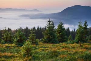 viagens, caminhadas. paisagem de verão - montanhas, grama verde, árvores e céu azul foto
