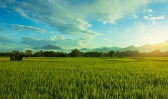 paisagem campo de arroz verde estação chuvosa e pôr do sol lindo cenário natural foto