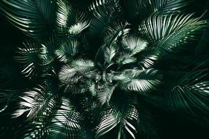 jardim vertical com folha verde tropical, tom escuro foto