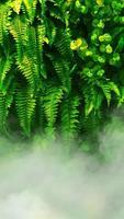 jardim vertical com folha verde tropical com nevoeiro e chuva. foto