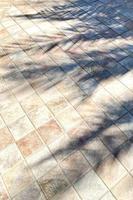 sombra de palmeira no chão de ladrilhos foto