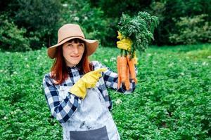 agricultora segura um monte de cenouras na horta ao fundo foto