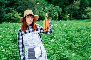 agricultora segura um monte de cenouras em sua horta foto