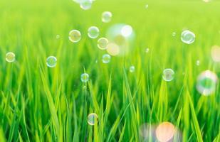 grama suculenta exuberante no prado com bolhas de sabão foto