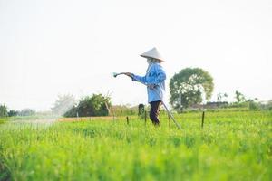 agricultor está regando seu campo de cebola, na tarde ensolarada foto