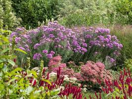 flores coloridas desabrochando em um jardim de fim de verão foto
