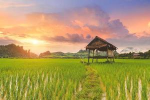 paisagem de campo de arroz em casca com cores quentes do céu. foto