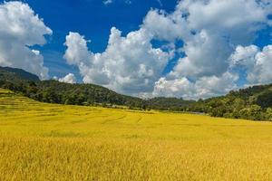 campo de terraços de arroz amarelo dourado em vista de mouantain. foto