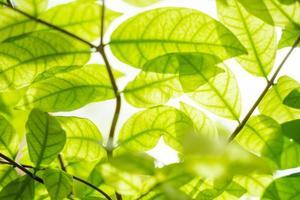 lindas folhas verdes com luz solar. foto