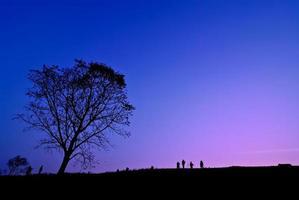silhueta de jovem fotógrafo tirando foto perto de uma árvore de paisagem durante o pôr do sol