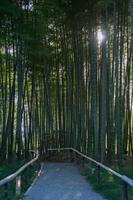 lindo caminho cruzando uma floresta de bambu com as árvores protegendo do sol. ao ar livre sem pessoas.japan foto