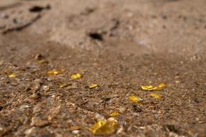 minério de pepita de ouro puro encontrado na mina com fontes subaquáticas naturais foto