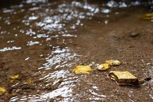 Minério de pepita de ouro puro encontrado na mina com fontes naturais de água foto