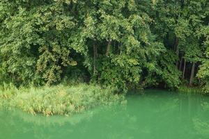 lago de floresta coberta de vegetação selvagem com água verde. foto