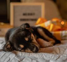 cachorrinho fofo deitado na cama com luzes e caixas de presente foto