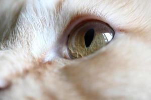 olhos de gato foto