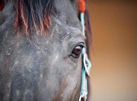 cabeça de cavalo e olhos fecham foto