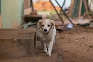 cachorro doméstico em uma fazenda foto