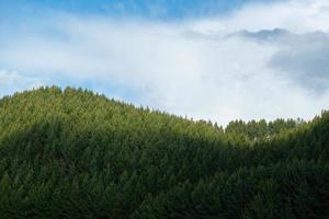 belos pinheiros no fundo no topo das montanhas. foto