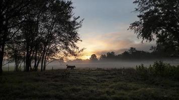 cachorro andando solto em um campo ao nascer ou pôr do sol foto