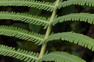 detalhe de samambaias, floresta nublada dos andes, equador foto