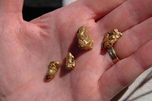 pepitas de ouro na mão foto