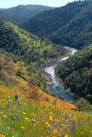 South Fork American River e Papoulas foto