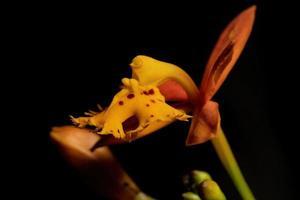 flor de orquídea amarela foto