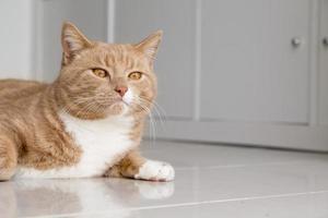 gato ruivo relaxando em casa foto